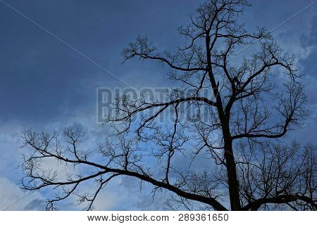 Black Branches Of A Tree Against A Dark Blue Sky
