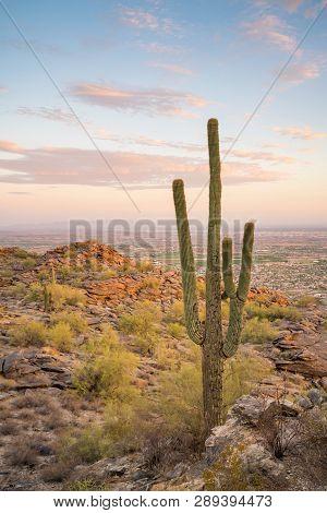 View Of Phoenix With  Saguaro Cactus