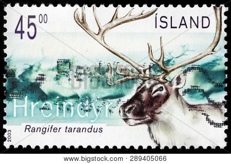 Luga, Russia - February 13, 2019: A Stamp Printed By Iceland Shows Reindeer Or Caribou - A Species O