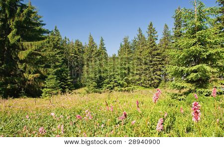 Beautiful Summer Forest