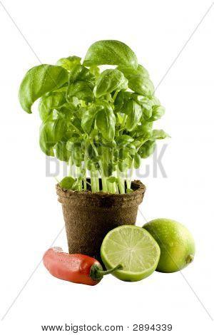 Basil, Lime & Chili Isolated On White Background