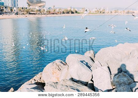 Barcelona, Spain - December 28, 2018: Coast Rocks And Calm Sea With Seagulls Flying Over Water, Barc