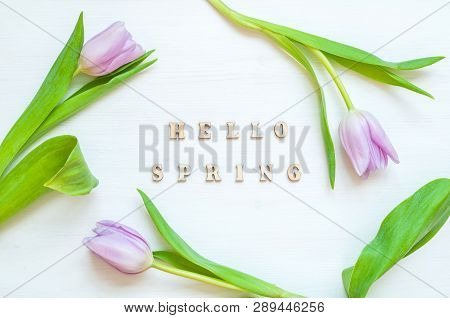 Spring flower background - composition made of pink tulip flowers and wooden inscription Hello Spring on the white background. Flat lay, top view