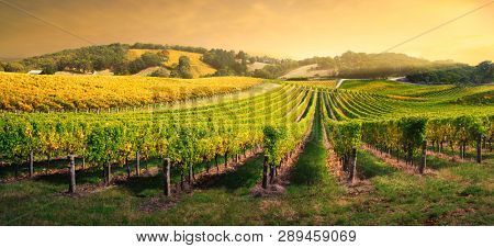 Beautiful Vineyard in the Adelaide Hills, South Australia