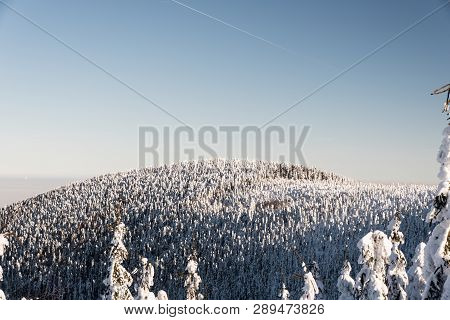 View To Malchor Hill With Frozen Forest From Hiking Trail Bellow Lysa Hora Hill In Moravskoslezske B