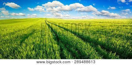Panoramic Landscape With Idyllic Vast Green Fields, Nice Blue Sky And Fluffy White Clouds