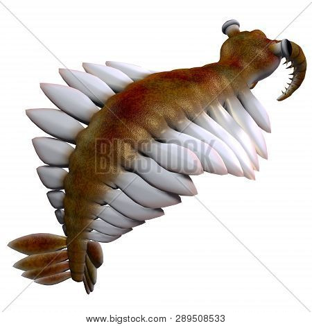 Cambrian Anomalocaris Tail 3d Illustration - Anomalocaris Was A Marine Carnivorous Fish That Lived I