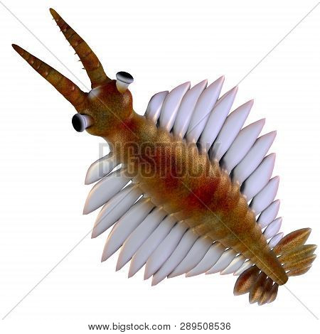 Cambrian Anomalocaris Head 3d Illustration - Anomalocaris Was A Marine Carnivorous Fish That Lived I