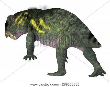 Lystrosaurus Dinosaur Tail 3d Illustration - Lystrosaurus Was A Dicynodont Therapsid Herbivore Dinos