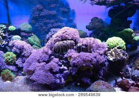 A Lot Of Corals In A Marine Aquarium