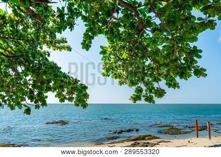 Umbrella Tree At Sand Beach Of Tropical Sea. Summer Vacation At The Beach. Branches Of Tree And Gree