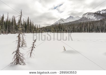 Landscape In The Canadian Rocky Mountains With Traks In The Snow.