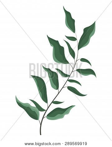 Leaves Bouquet Green Drawing Vector Illustration Graphic Design