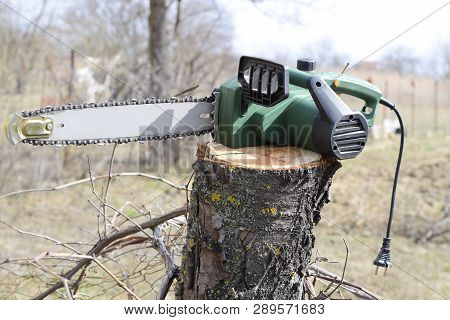 Sawn Electric Sawing Tree. The Stump Of Saw Cut Branches.