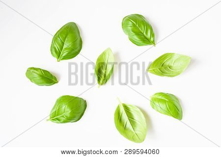 Freshness Plant Basil Or Italy  Basil With Green Narrow Leaves ,plant In Garden, Often Use In South