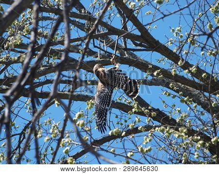 The Hawk Is About To Control The Snake That Is Trying To Bit The Hawk As It Grabs The Snakes Head In