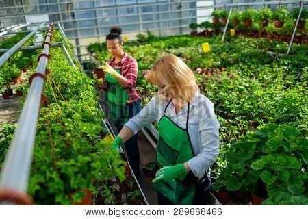 Two women working in a botanical garden