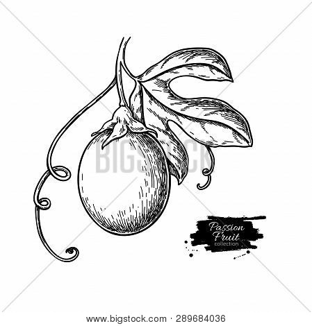 Passion Fruit Branch Vector Drawing. Hand Drawn Tropical Food Illustration. Engraved Summer Passionf