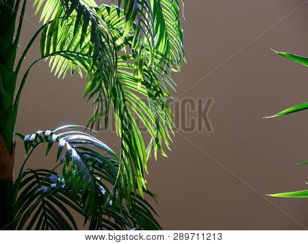House Plant Palm Tree With Large Leaves