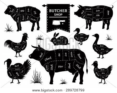 Butcher Diagrams. Animal Meat Cuts, Cow Pig Rabbit Lamb Rooster Domestic Animals Silhouettes. Vector