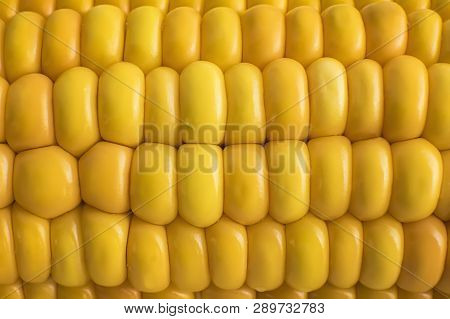 Boiled Sweet Corn Background. Goldish Grains Texture. Yellowness Of Maize. Natural Seguence Of Corn