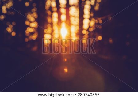 Sunset In Pine Forest Nature Background. Dark Background Of Pine Forest.last Sun In Forest Nature. S