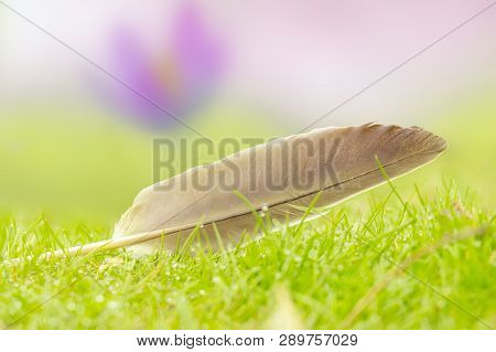 View Of A Feather On Green Grass. Feather On A Meadow. Close-up Of A Feather On Blurred Background.
