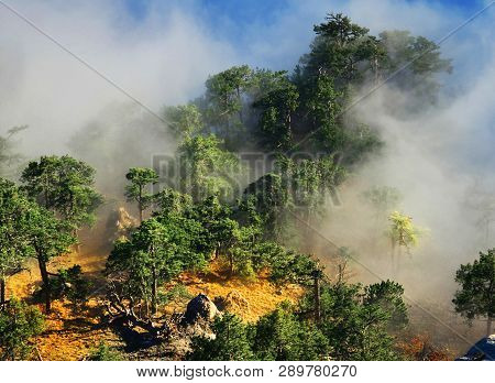 Forest. View Of Evergreen,conifer Forest In Mountains