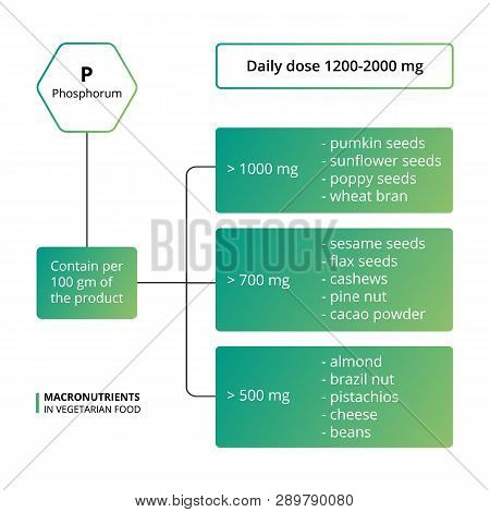 Vector Scheme Of The Nutrients, Vitamins And Minerals. Number Of Macronutrients In Vegetarian Food.