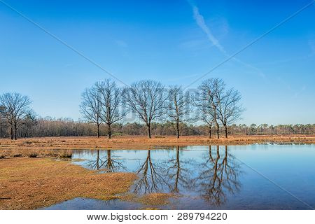 Trees With Bare Branches Reflected In The Mirror Smooth Water Of A Mere In The Landscape Of The Gald