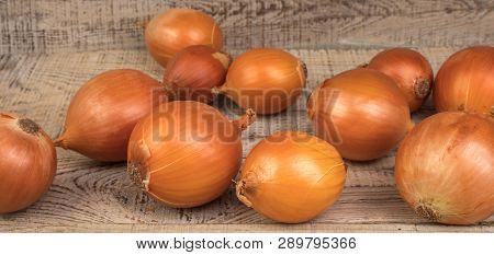 Ripe, Beautiful Onions On A Textured, Wooden Background. Country Style.
