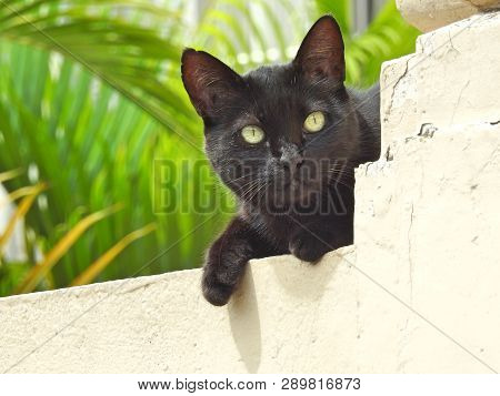Close-up Of A Black Street Cat Standing On A Wall, Lit By The Summer Sun. Clear And Watchful Eyes. I