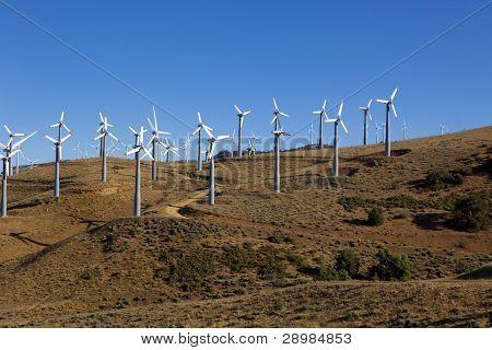 Many Wind Turbines On Hill