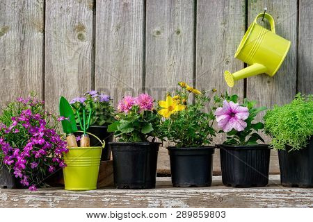 Seedlings Of Garden Plants And Beautiful Flowers In Flowerpots For Planting On A Flower Bed. Hanging