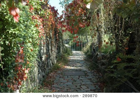 Mountain Alley