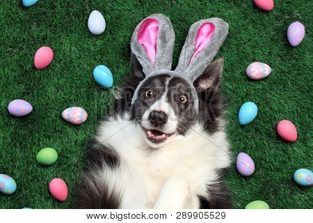 Happy dog with bunny ears surrounded by Easter eggs