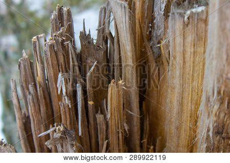 Nature. Broken Tree Broken Stump. Woody Stump. Sliver On Broken. Old Forest. Splinted Stump.