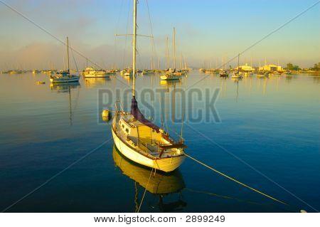Sail Boats At San Diego Harbor