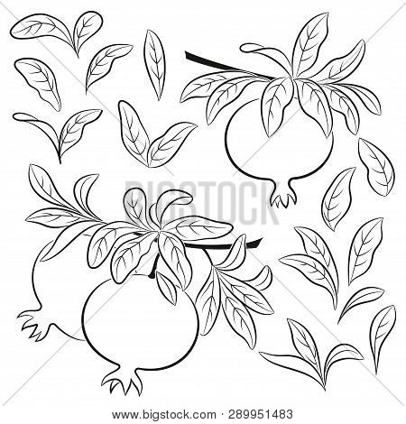 Set Of Plant Brunches With Pomegranates, Fruits And Leaves, Black Pictograms Isolated On White. Vect