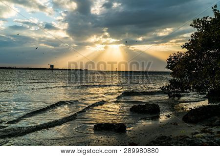 A look around Emerson Point Preserve and a beautiful sunset over Tampa Bay. poster
