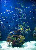 Tropical aquarium full of life. poster