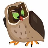 Cartoon angry worried owl isolated on white. Vector illustration. poster