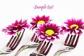Pink daisies balanced on table forks with space for text poster