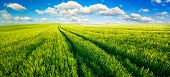 Panoramic landscape with idyllic vast green fields, nice blue sky and fluffy white clouds poster