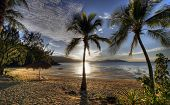 An early morning sunrise at a sandy beach with tropical palms poster