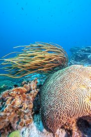 Coral Reef Underwater Off The Coast Of The Island Of Bonaire