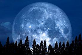 Full Rose Moon Back On Silhouette Pine On Night Sky
