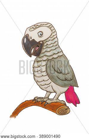 Grey Parrot Cartoon Illustration Over White Background