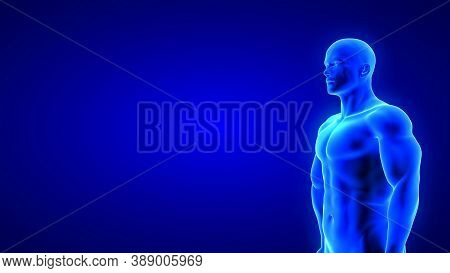 Male Fitness Body - Muscle Mass Building Illustration On Blue Background