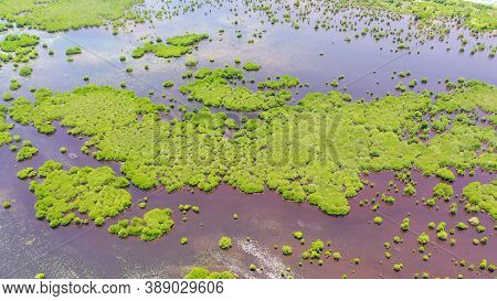Aerial View Of Panoramic Mangrove Forest. Mangrove Landscape. Great Santa Cruz Island. Zamboanga, Mi